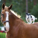paard-en-hond